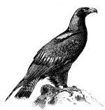 Adler_200.jpg