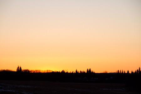 M_D5_SunsetTreeline.jpg