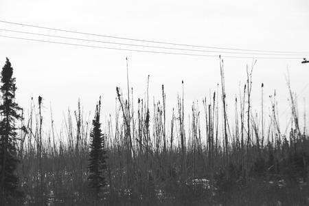 S_D5_DeadTrees_I.jpg