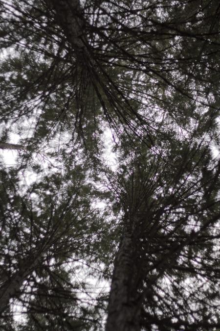 ND_D19_TreesUp.jpg