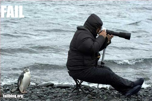 fail-owned-penguin-photographer-fail.jpg